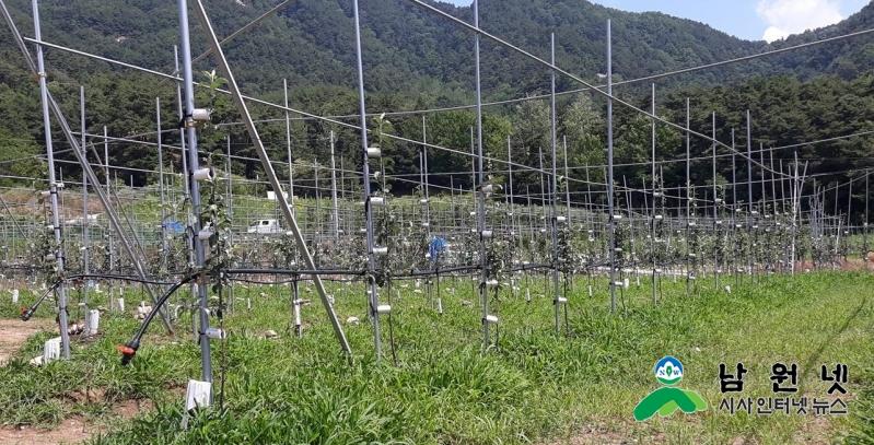 0806농정과-삼복더위속 논 타작물 재배관리 구슬땀2.jpg