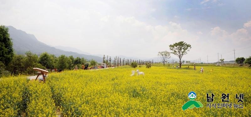0515대강면-섬진강 대강 유채꽃 농업경관 축제 개최3.JPG